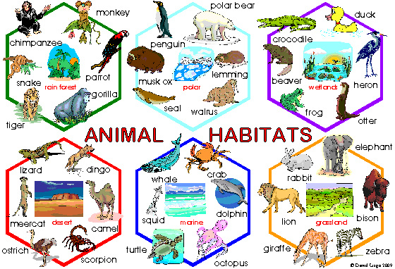 Image result for living habitats